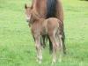 Cheyenne\'s Foal