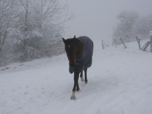 Snowy Diablo