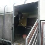 Bartoli loading pracice