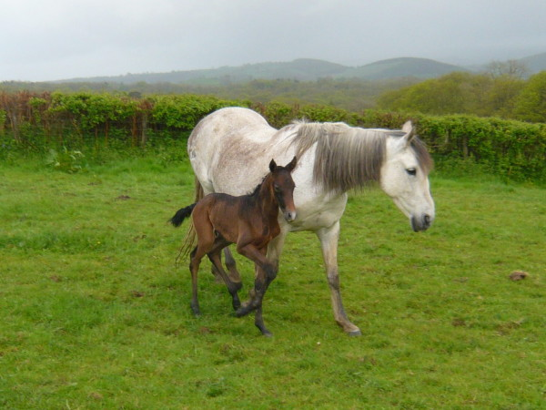 banderra-foal-10052014